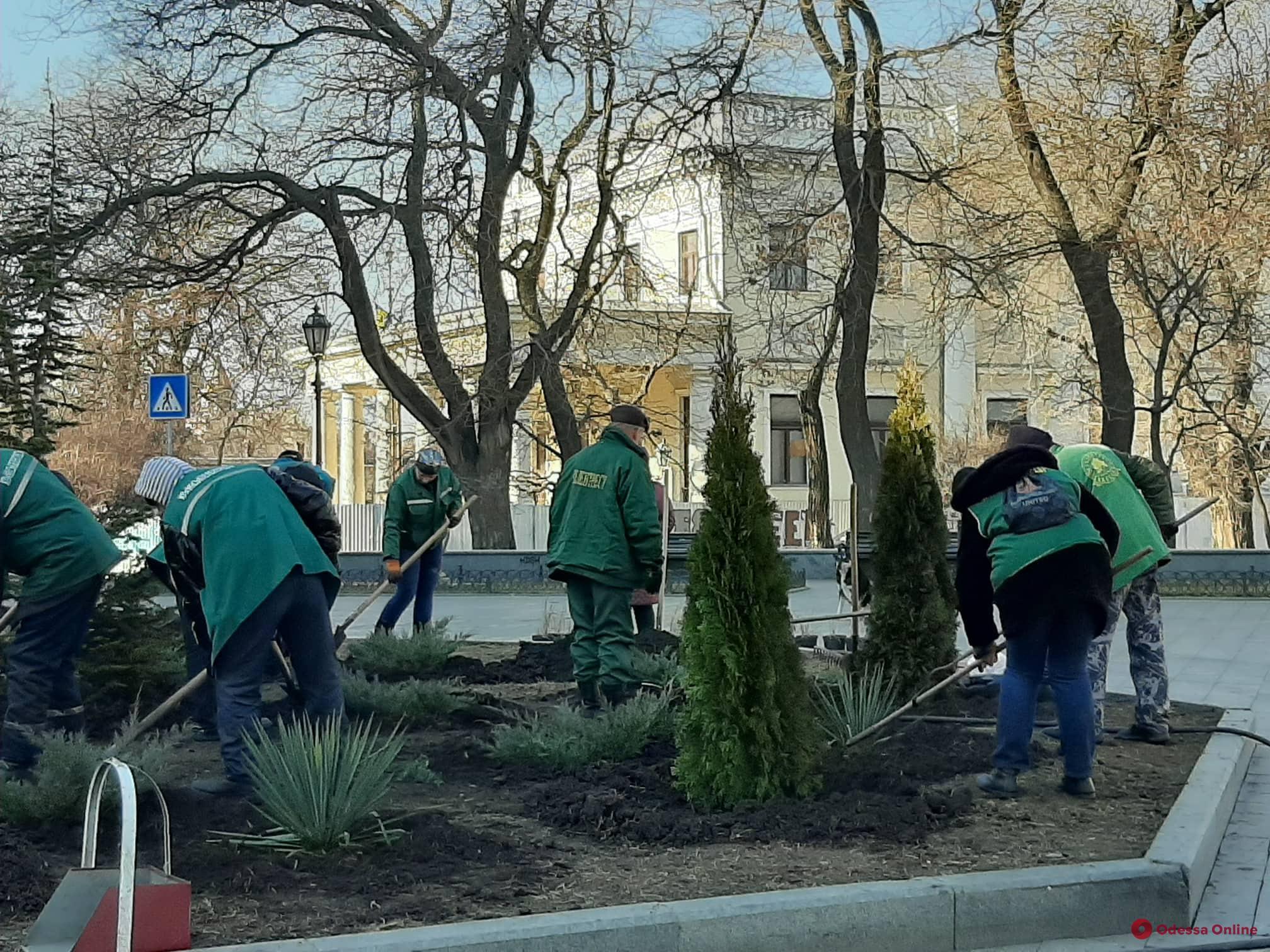 Декоративные яблони, туи и кизильник: в центре Одессы озеленяют клумбы (фото)