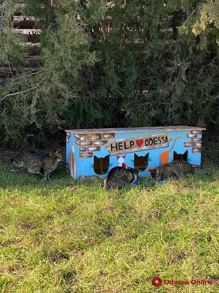 В Одессе устанавливают теплые домики дли уличных котов и кошек (фото)