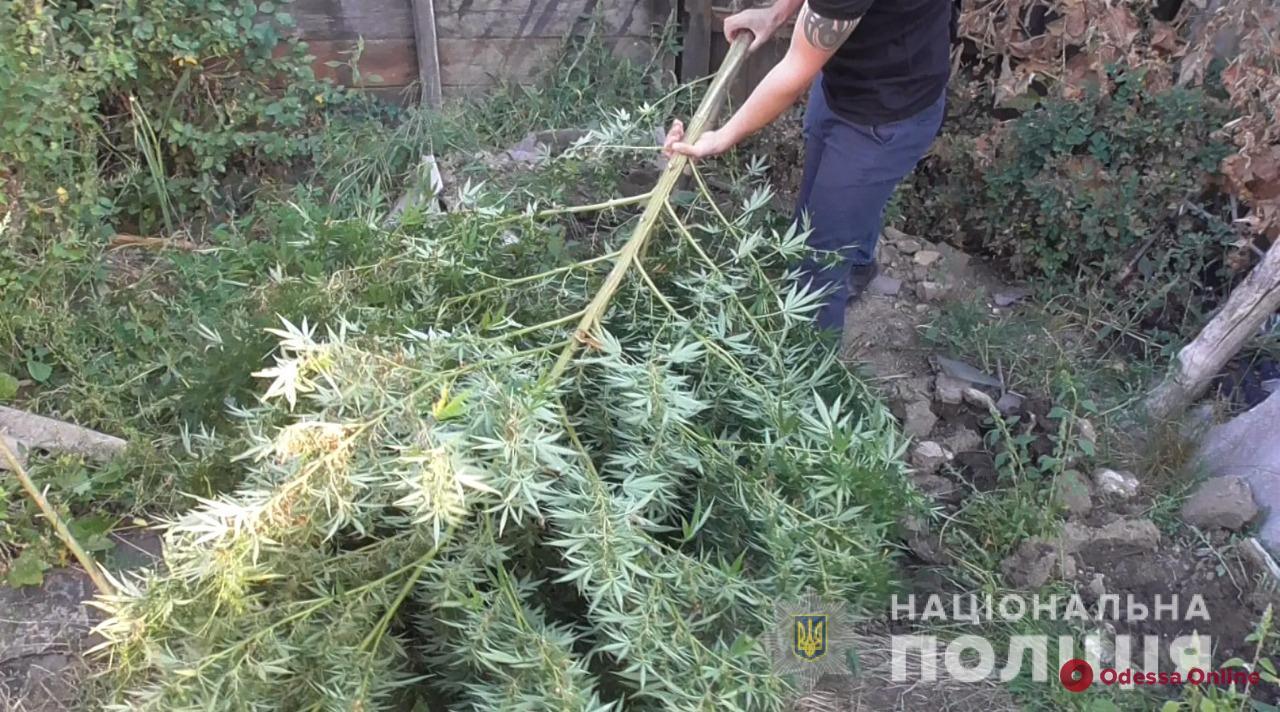 «Наркоаграрий» из Одесской области отделался условным сроком