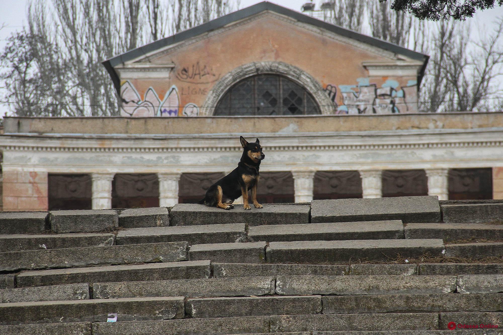Очаровательные обитатели Дюковского парка (фоторепортаж)