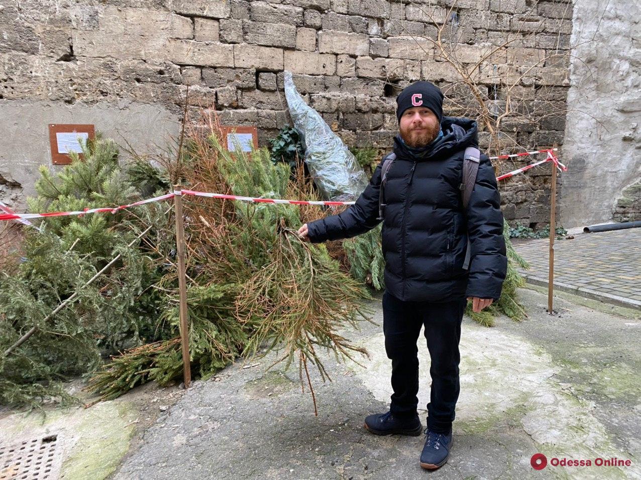 Меняю новогоднее дерево на сладости: активнее всего сдают елочки на переработку жители Черемушек