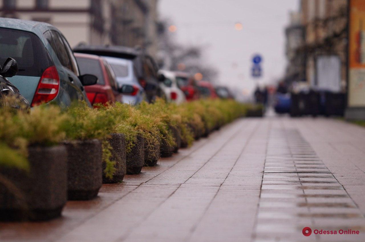 «Осенний» январь в Одессе (фоторепортаж)