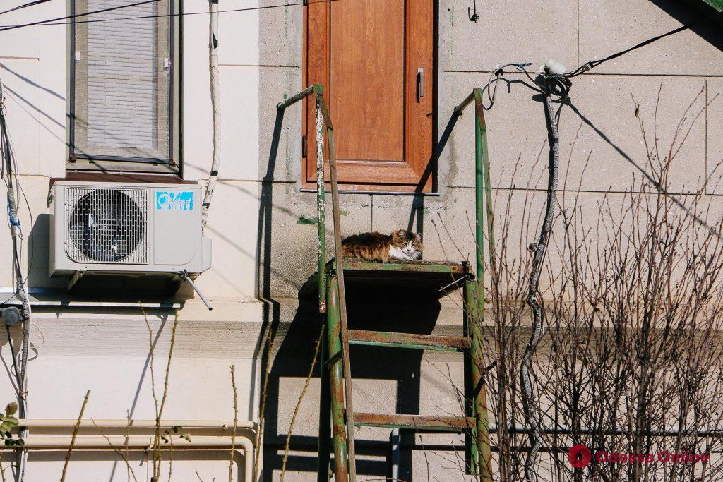 Новостройки, милые домики и собаки: фотопрогулка по улице Толбухина