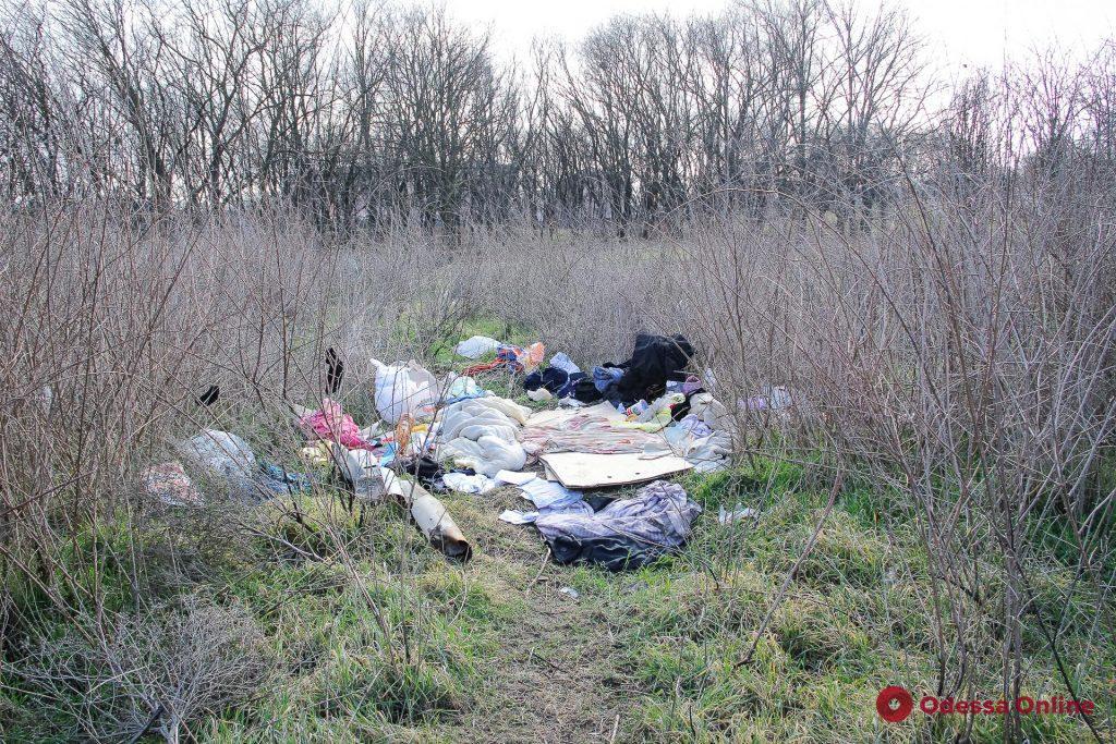 Арт-объекты, мусор и кладбище домашних животных: как сегодня выглядит Артиллерийский парк (фоторепортаж)