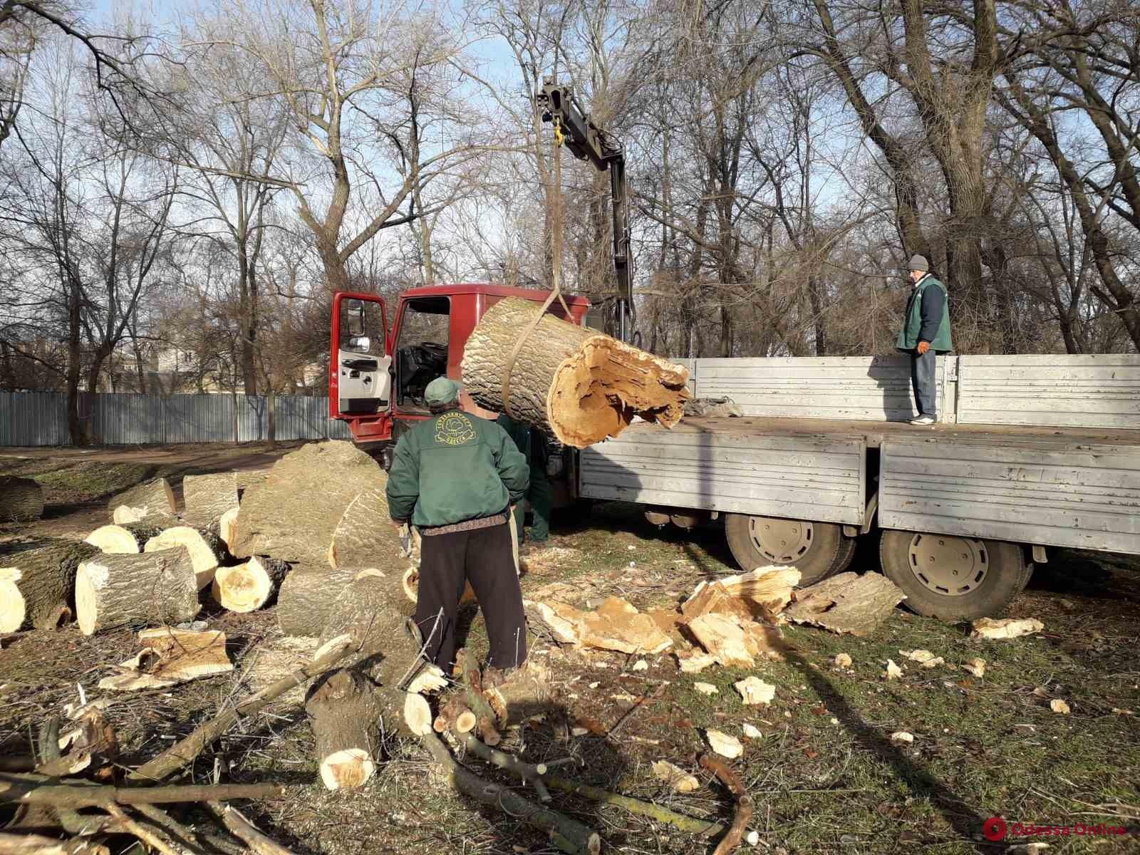 В Одессе коммунальщики продолжают ликвидировать последствия урагана