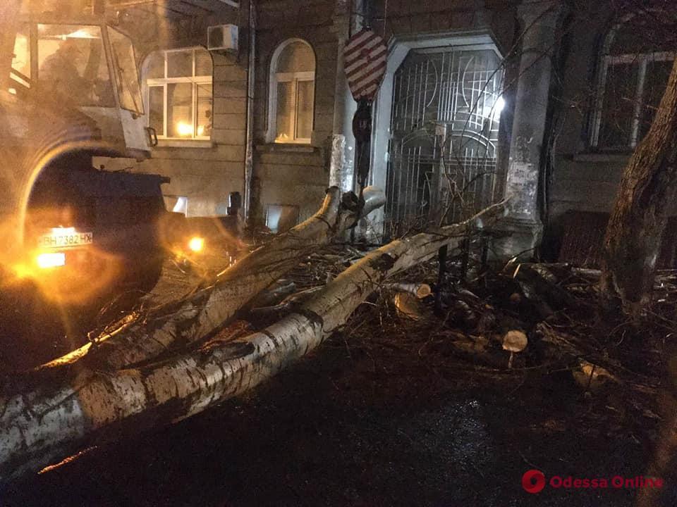 За ночь в Одессе повалены более полусотни деревьев