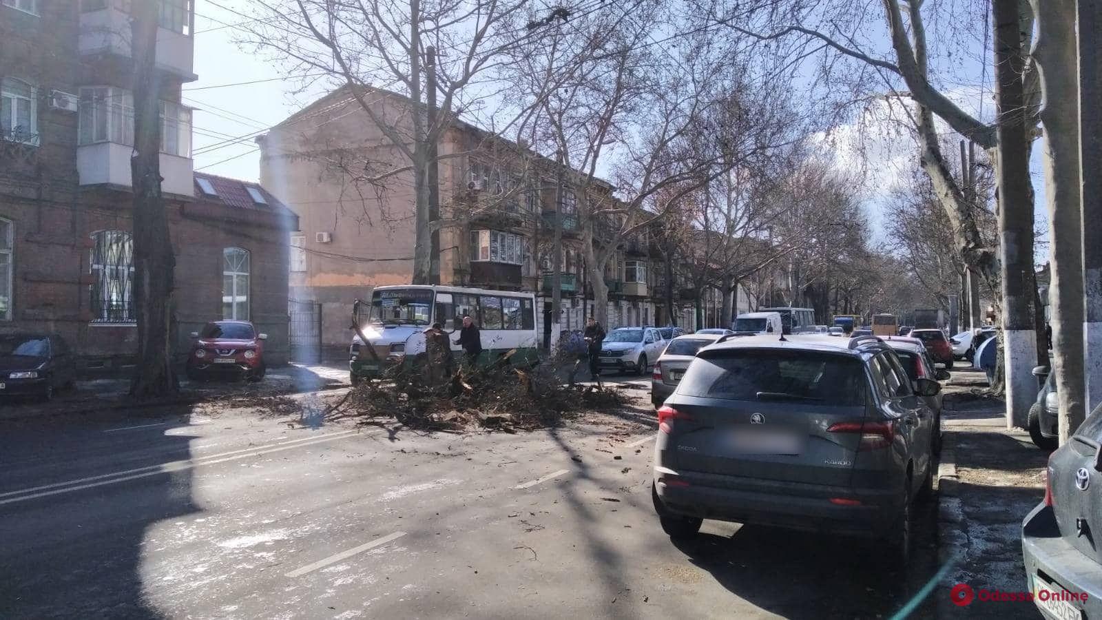 На Молдаванке крупная ветка чуть не упала на маршрутку