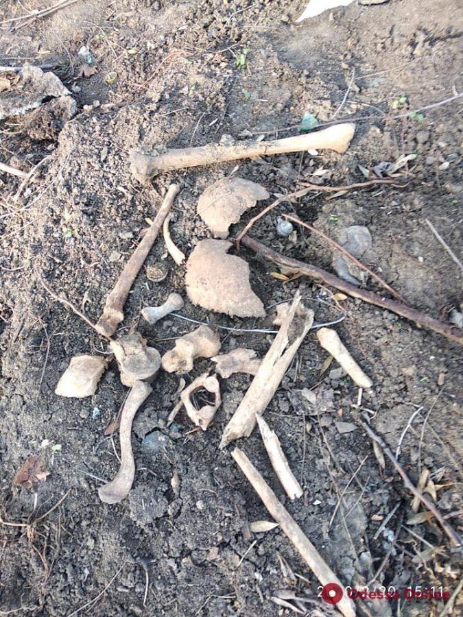 В Преображенском парке нашли человеческие кости (фото, видео)