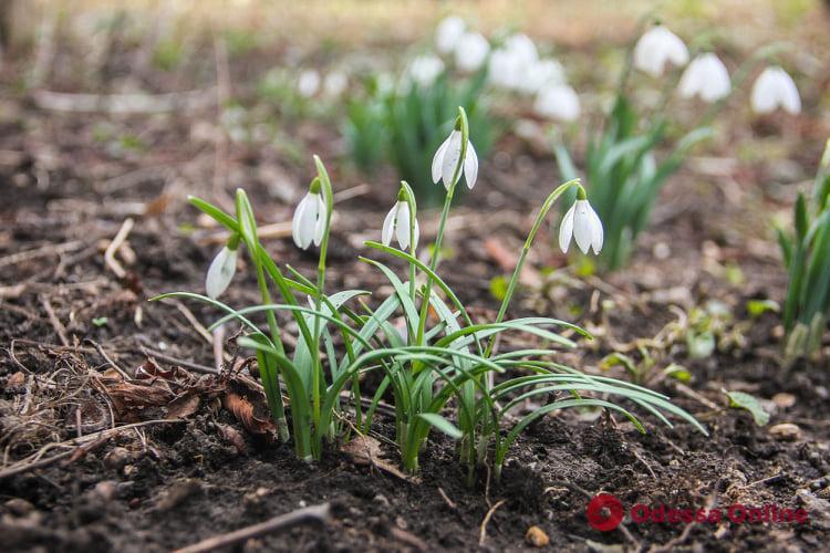 Какая погода ожидает одесситов 3 марта