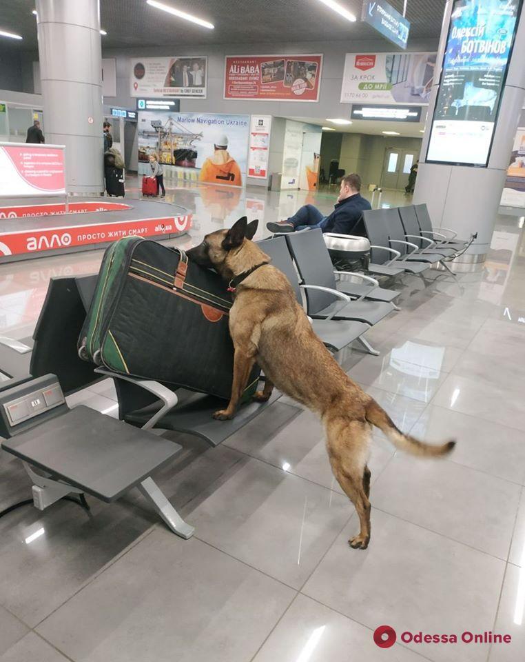 В Одесском аэропорту служебная собака обнаружила у иностранца наркотики