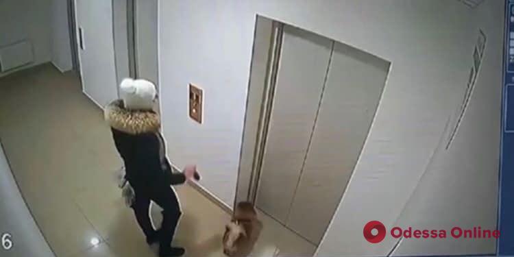 Одесса: в лифте многоэтажки маленькая собачка стала жертвой крупного агрессивного сородича (видео)