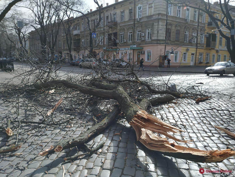 В Одессе штормовой ветер за несколько часов повалил 300 деревьев