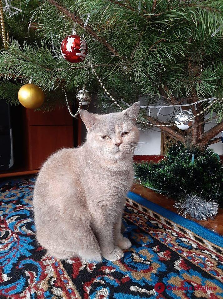 Усатые-полосатые питомцы читателей Odessa.online (фото)