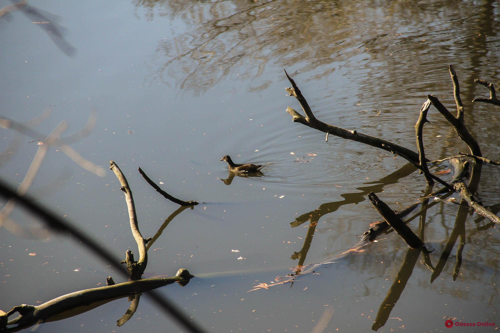 Много мусора и утки: как выглядит пруд возле бывшей джутовой фабрики (фоторепортаж)