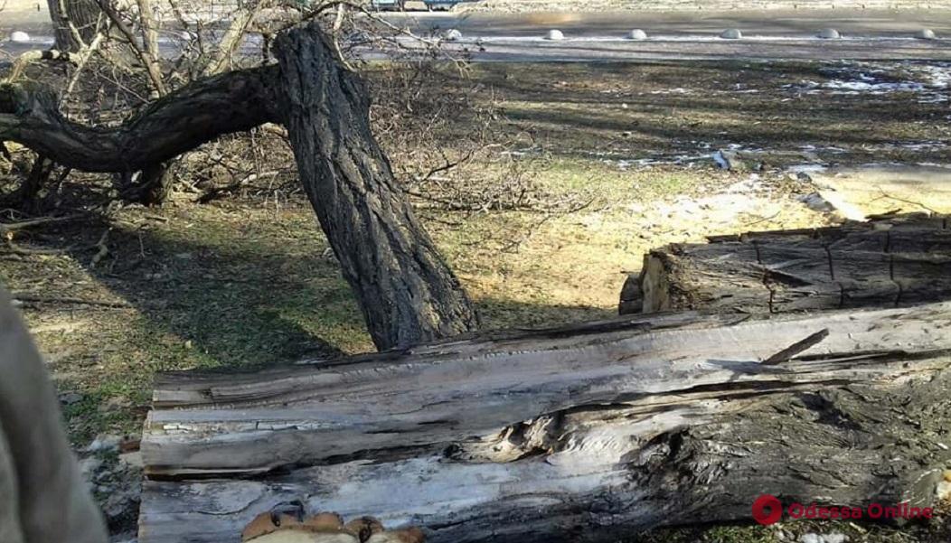 На Троицкой дерево упало на дом и заблокировало выход из парадной