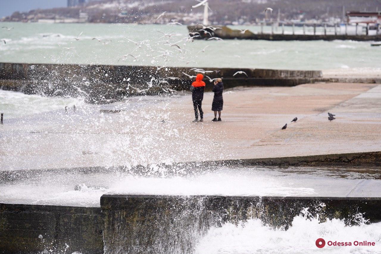 Чайки и морские волны: прогулка по набережной Ланжерона