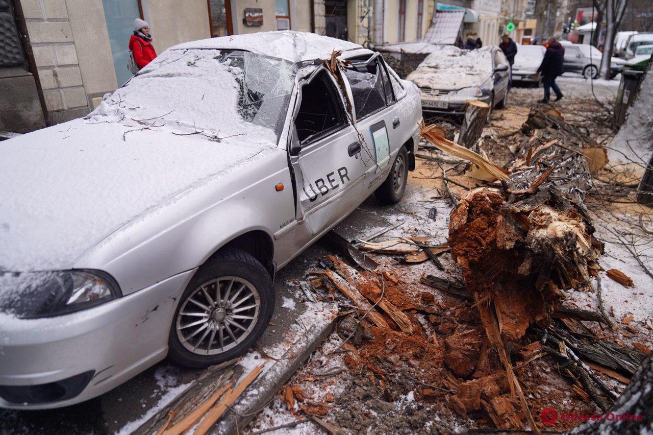 В центре Одессы дерево рухнуло на две машины
