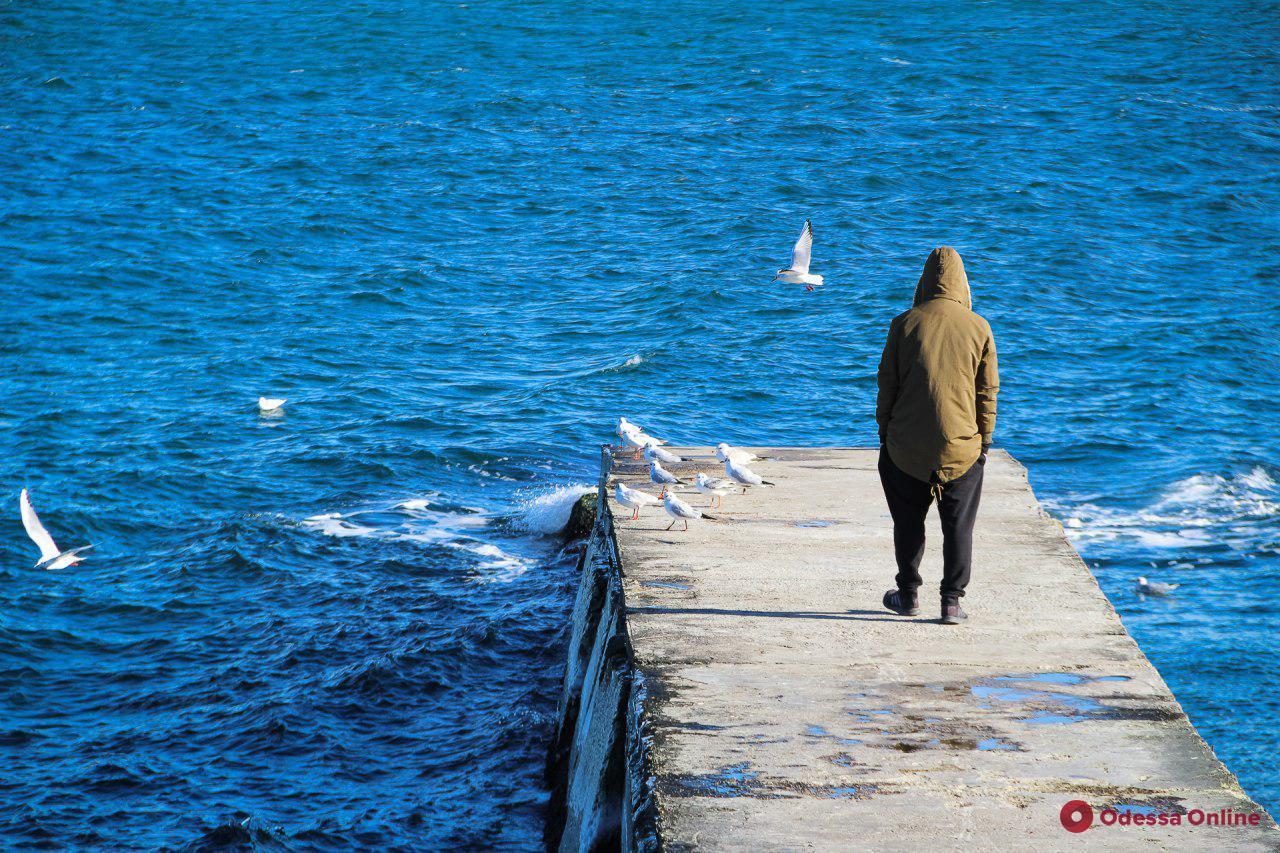 Мороз и солнце в Одессе: синоптики обещают теплые дни. Фоторепортаж