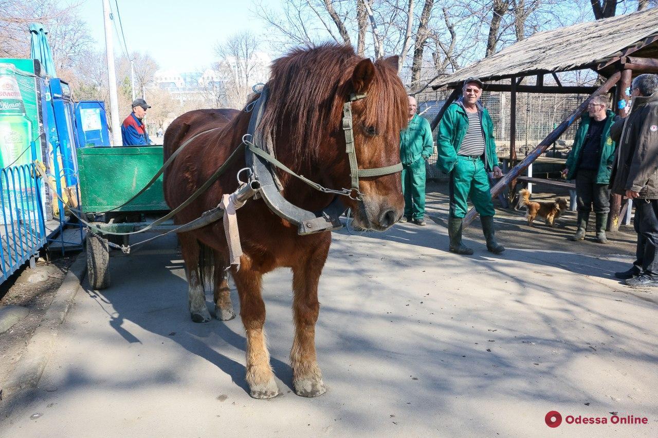 Величайшие истории побегов из одесского зоопарка