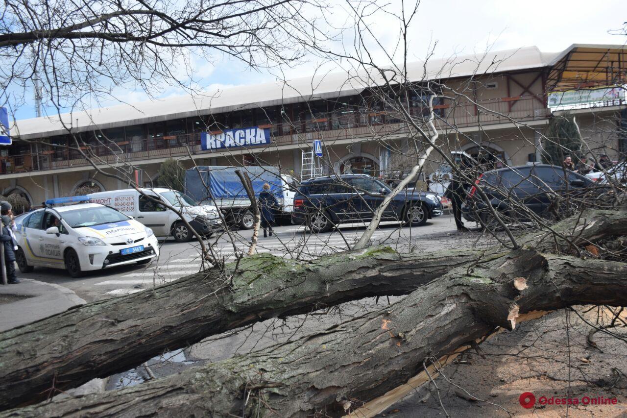 Возле Нового рынка упавшее дерево перекрыло дорогу (фото)