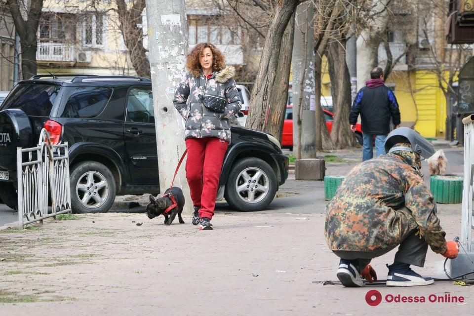 Одесситы и их хвостатые любимцы (фоторепортаж)