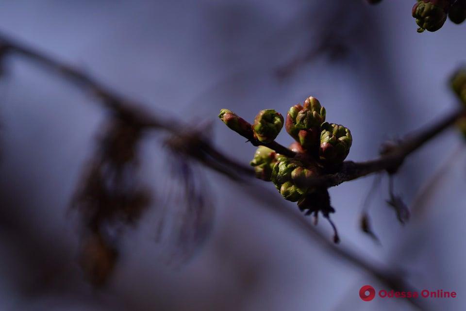 А у природы весна: микромир, который стоит увидеть (фоторепортаж)