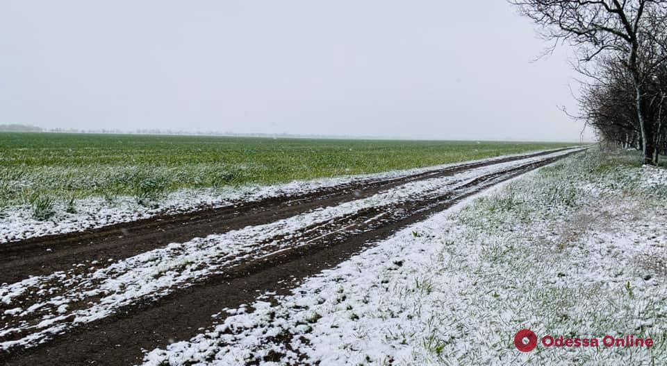 На юге Одесской области выпал снег (фото)