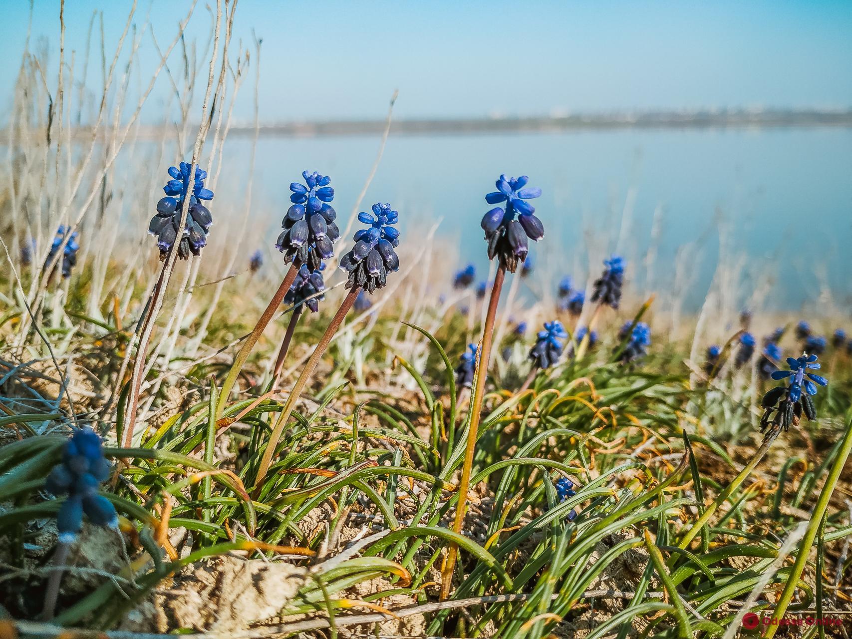 Весенний Куяльник: спокойный и безмятежный (фоторепортаж)