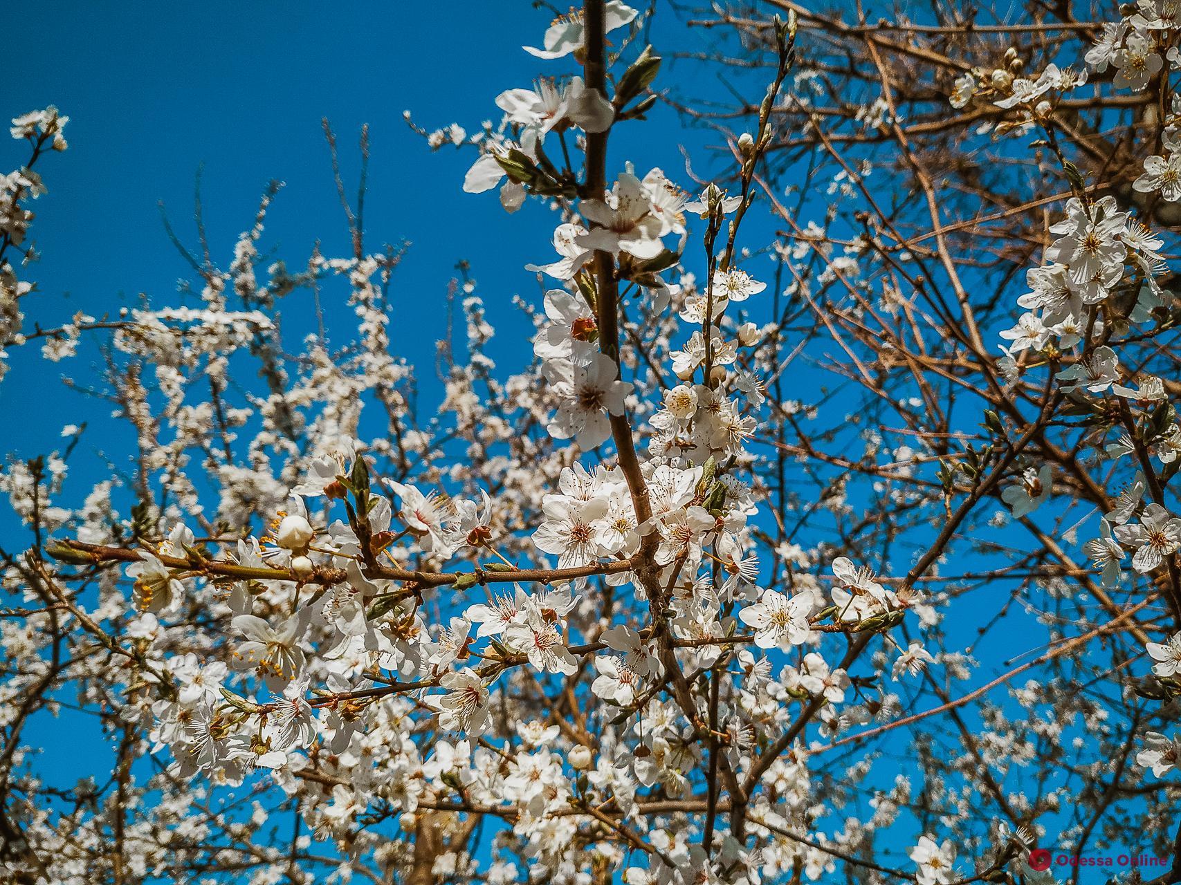 Какая погода ожидает одесситов 12 апреля