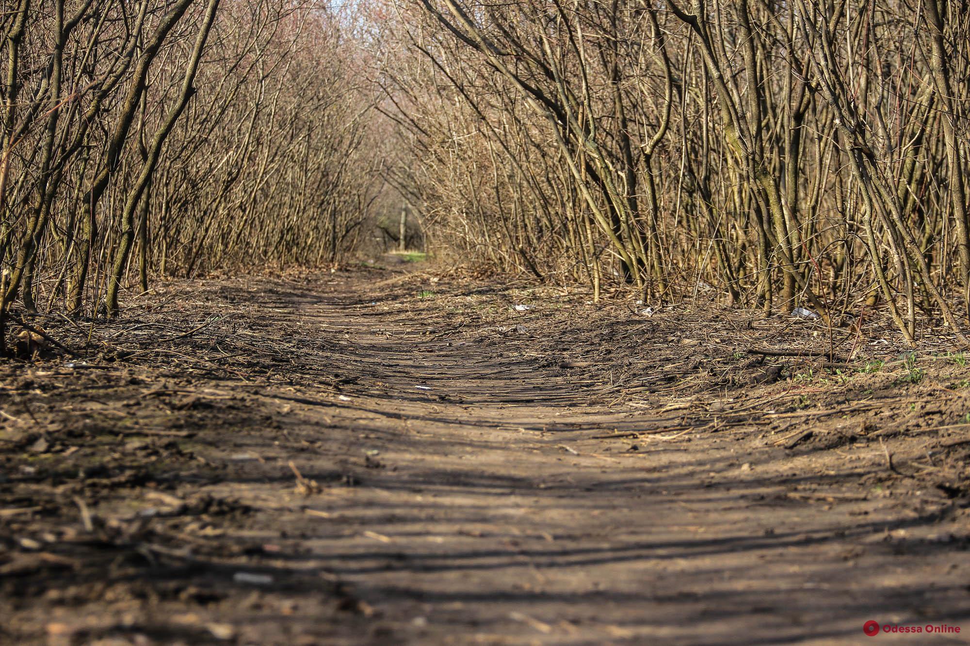 Только для своих: тоскливый и малопопулярный лесопарк «Аэропортовский» (фоторепортаж)