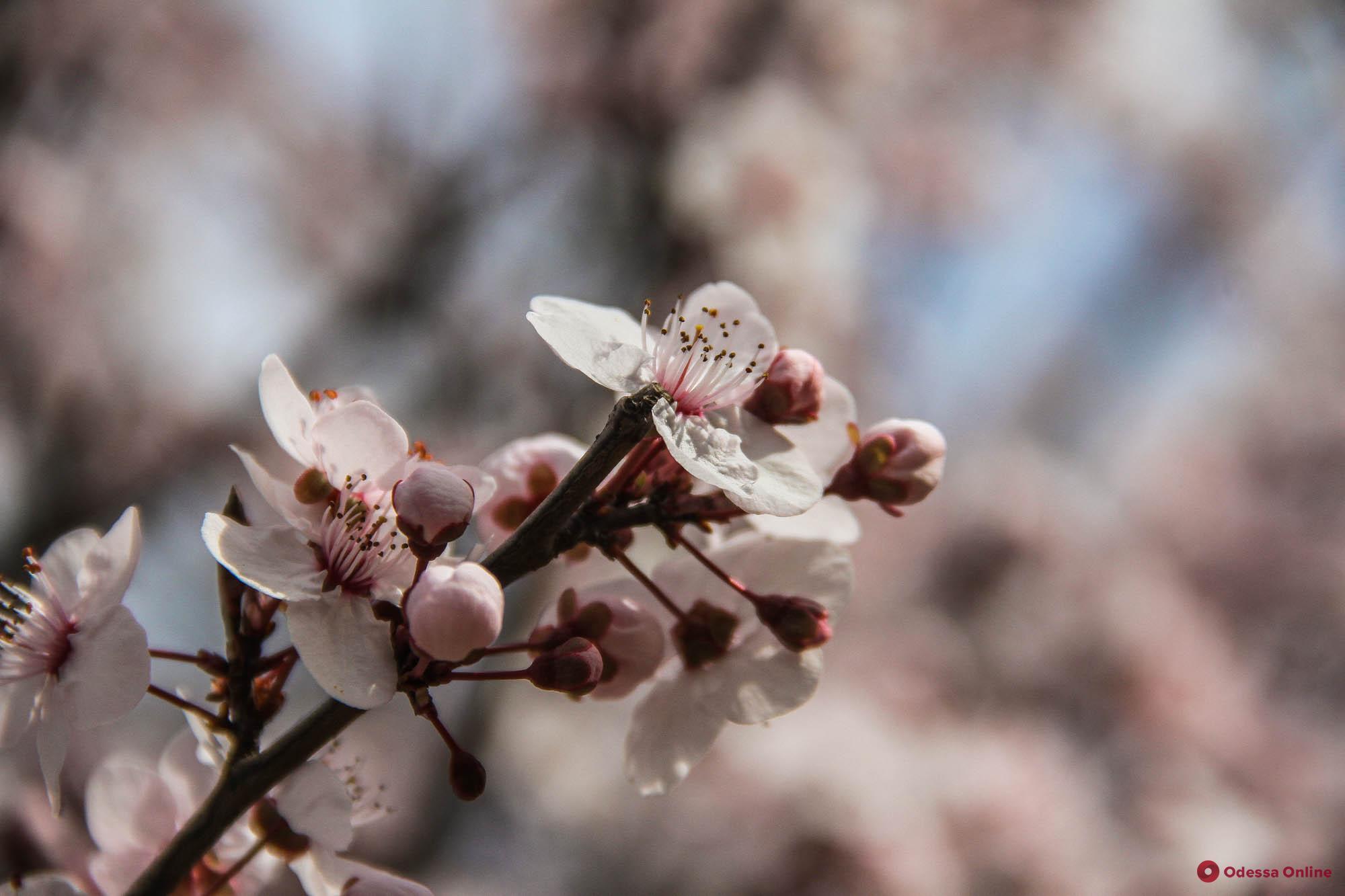 Какая погода ожидает одесситов 19 марта
