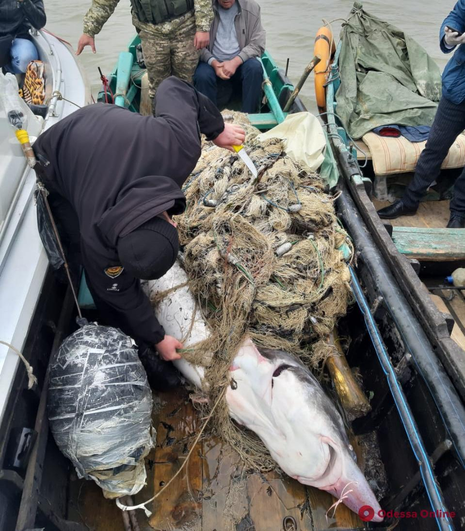 На Дунае браконьер напал с ножом на пограничника из-за краснокнижной белуги (видео)
