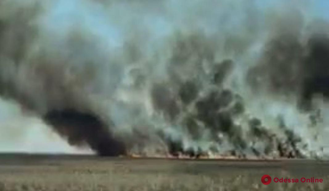 На Днестре снова горят плавни (видео)