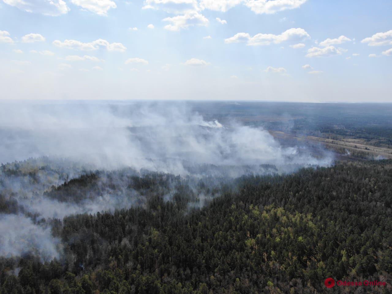 В Житомирской области снова горят леса (фото, видео)