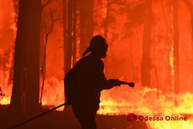 Верховная Рада ужесточила ответственность за сожжение леса
