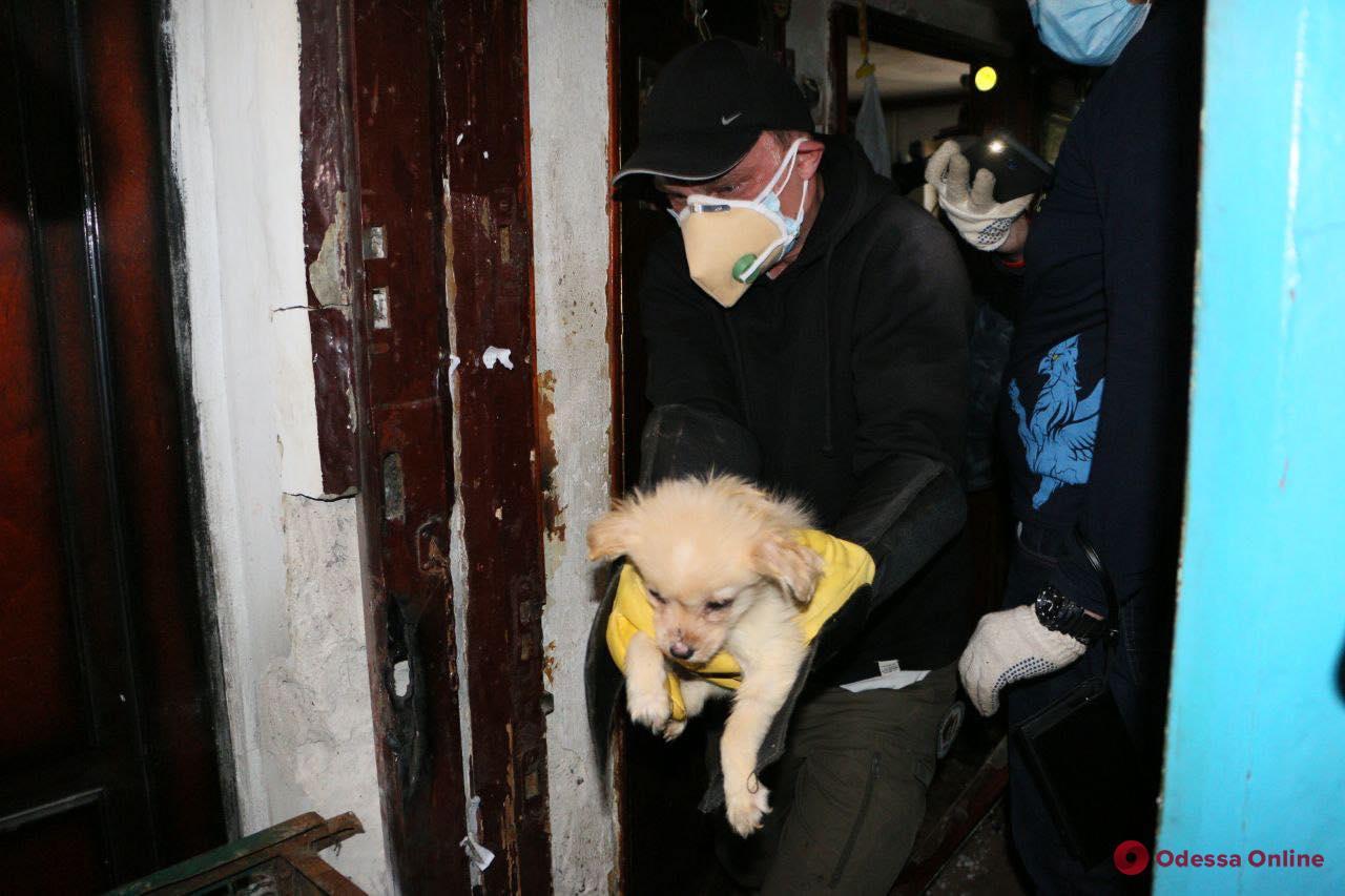 Пятнадцать собак в однокомнатной квартире: у одесситки изъяли запуганных питомцев и нашли останки умершего животного (фото, видео)