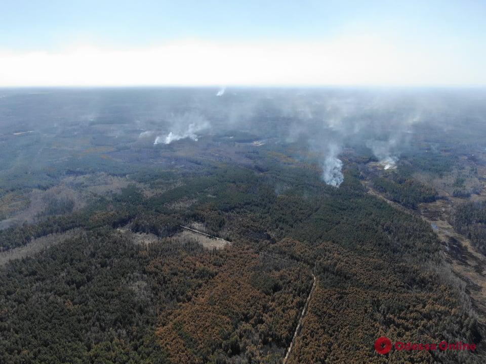 Одесские нацгвардейцы помогают тушить лесные пожары в Житомирской области