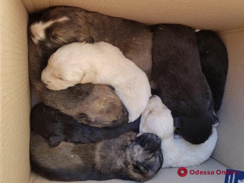 Второй день рождения: одесские патрульные спасли девять щенков (фото)