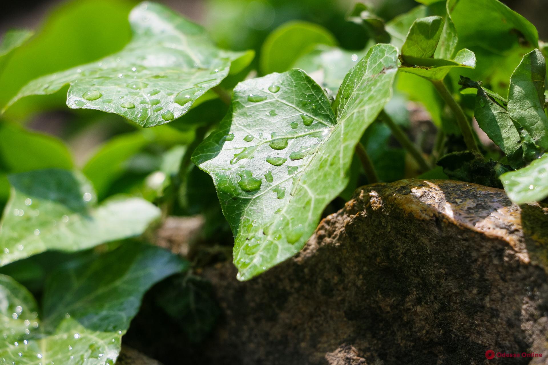Завтра в Одессе ожидается дождь и гроза