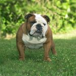 «Предоставлю собаку для выгула» — одессит предлагает способ обойти карантин (фотофакт)