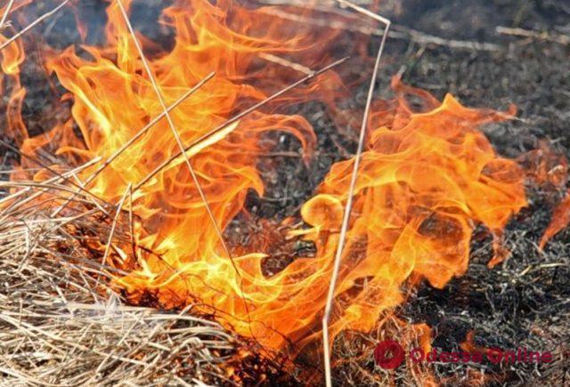 На склонах в районе Дачи Ковалевского на большой площади горела трава