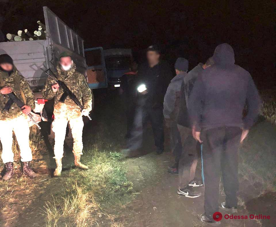 На юге Одесской области задержали «черных» лесорубов