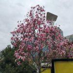 photo_2020-03-31_19-40-07 (2)