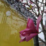 photo_2020-03-31_19-40-10 (4)