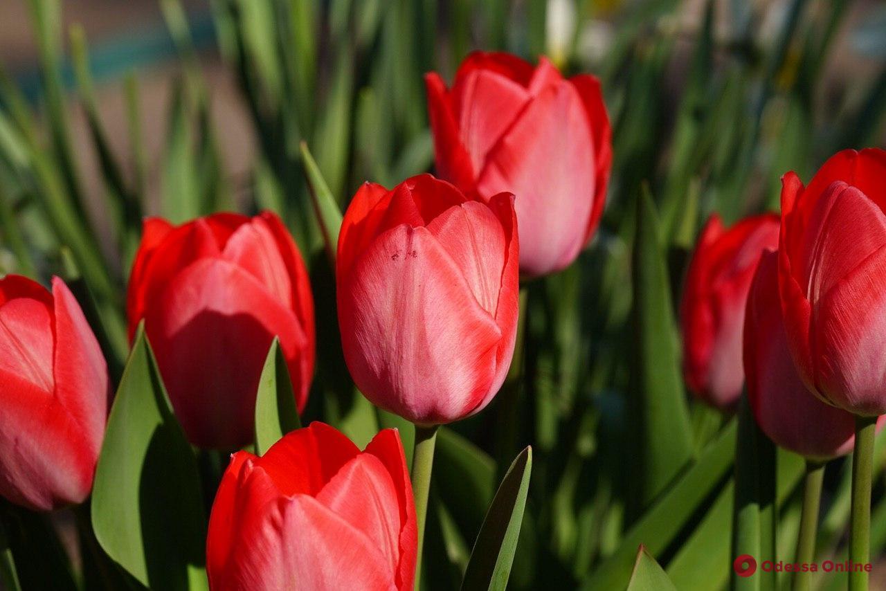 В Измаиле полиция привлекла к ответственности родителей юных «цветочных бизнесменов»