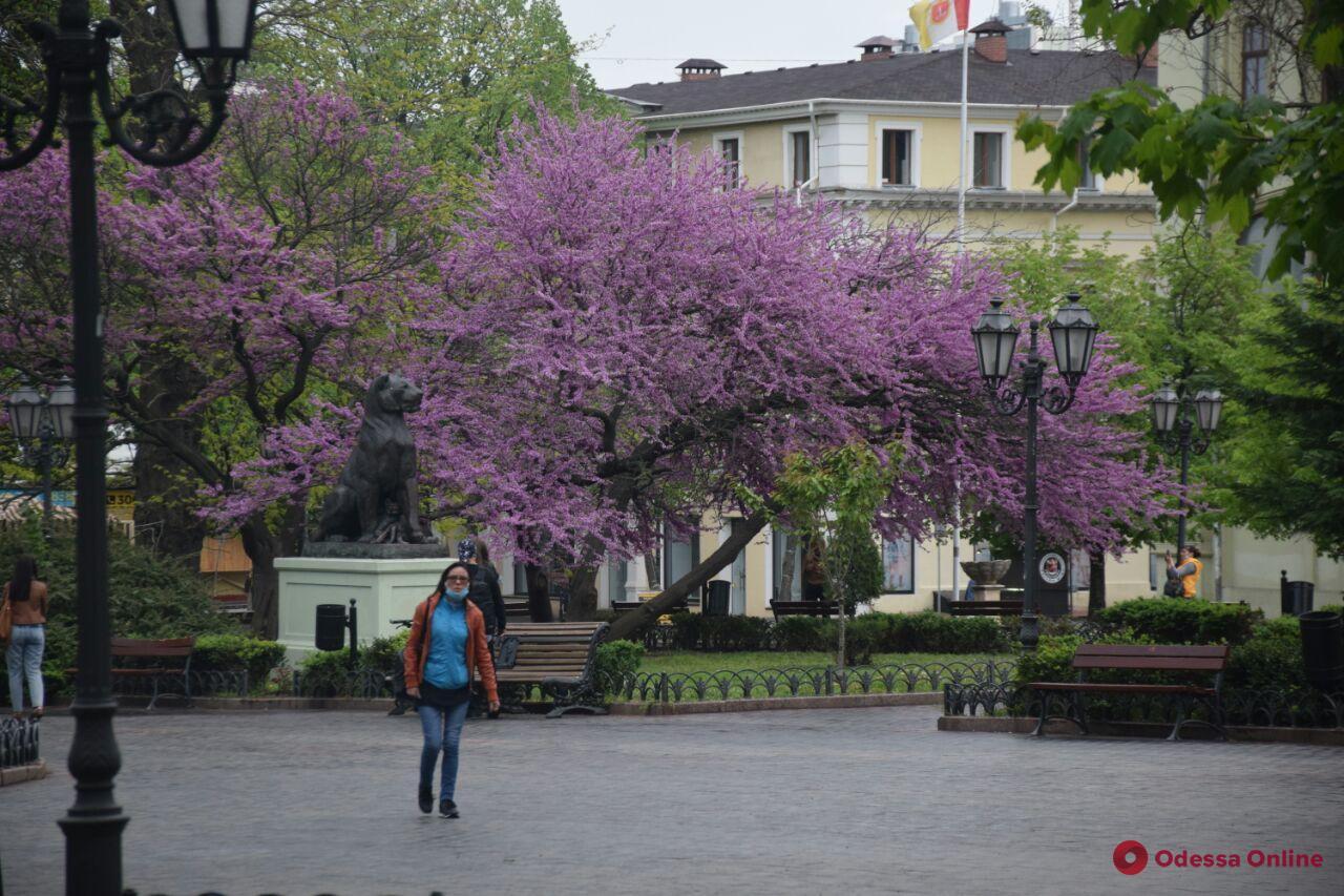 «Одесса в онлайне» для тех, кто дома: прогулка по Горсаду и Пастера