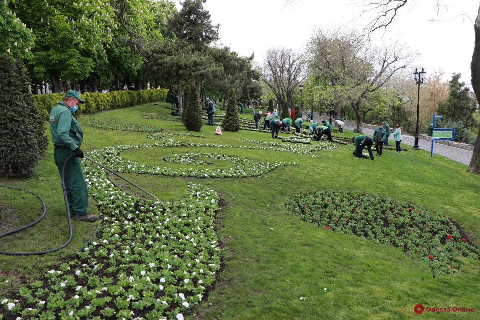 В Одессе высадят 600 тысяч цветов
