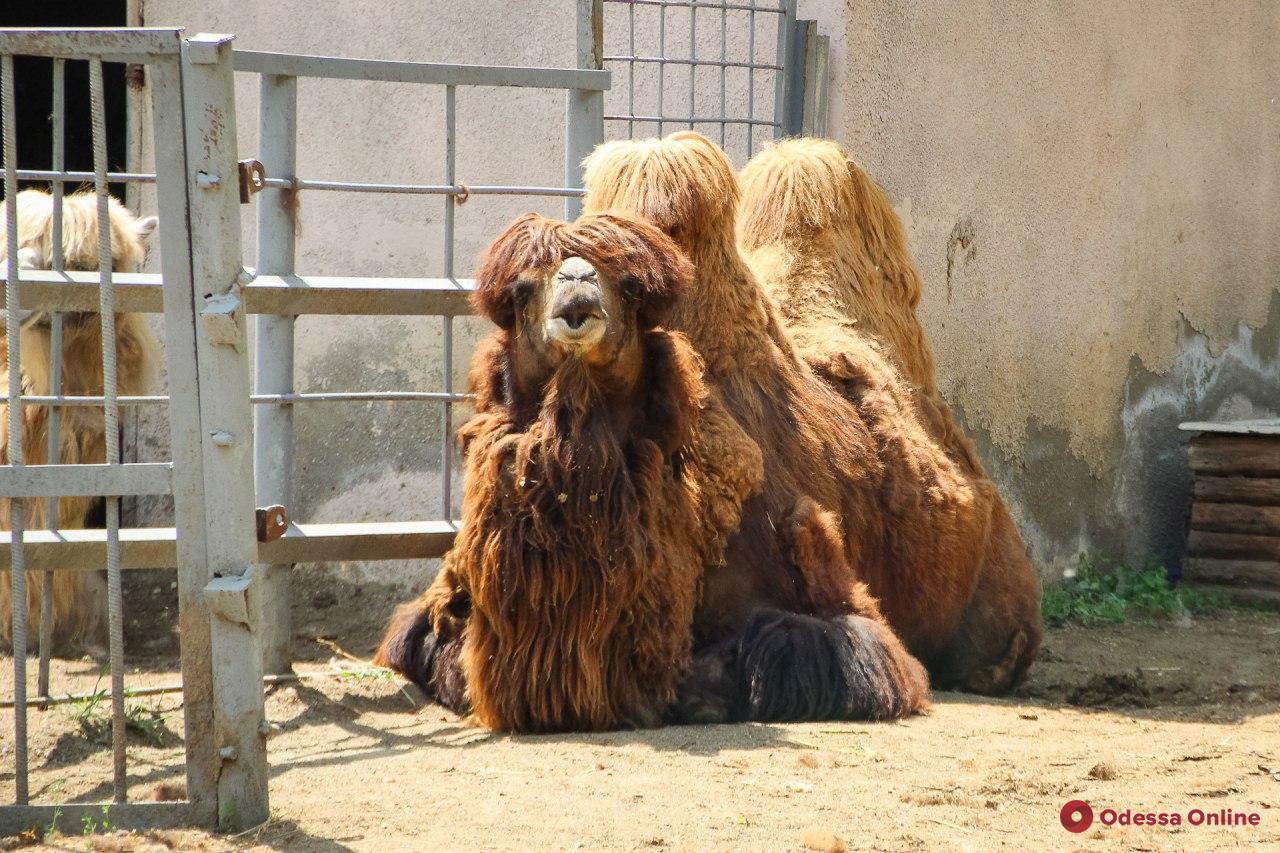 Одесский зоопарк откроется уже завтра