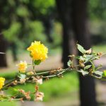 Прогулка по Одесскому ботаническому саду