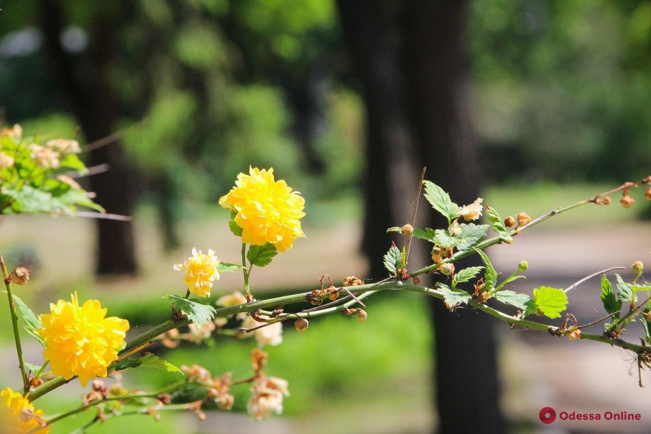 Прогулка по Одесскому ботаническому саду (фоторепортаж)